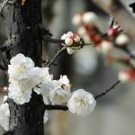 Bald kommt der Frühling!