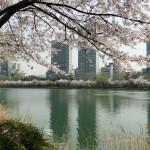 Der Seokchon Lake (Festivalgelände).
