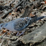 Wer weiß, was für ein Vogel das ist?