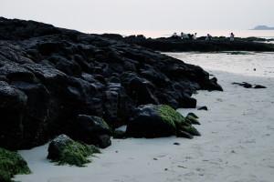 Jeju ist voller Lavagestein.