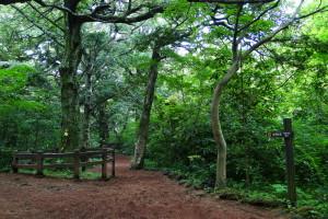 Im Bijarim Forest.