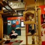 """Das Katzencafé """"Ycat"""" in Hongdae."""